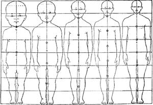 تناسب جسم الإنسان المعرفة