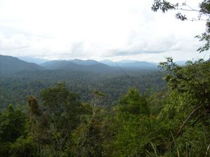 الغابات الاستوائية المطيرة المعرفة